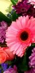 Lefebvre fleur